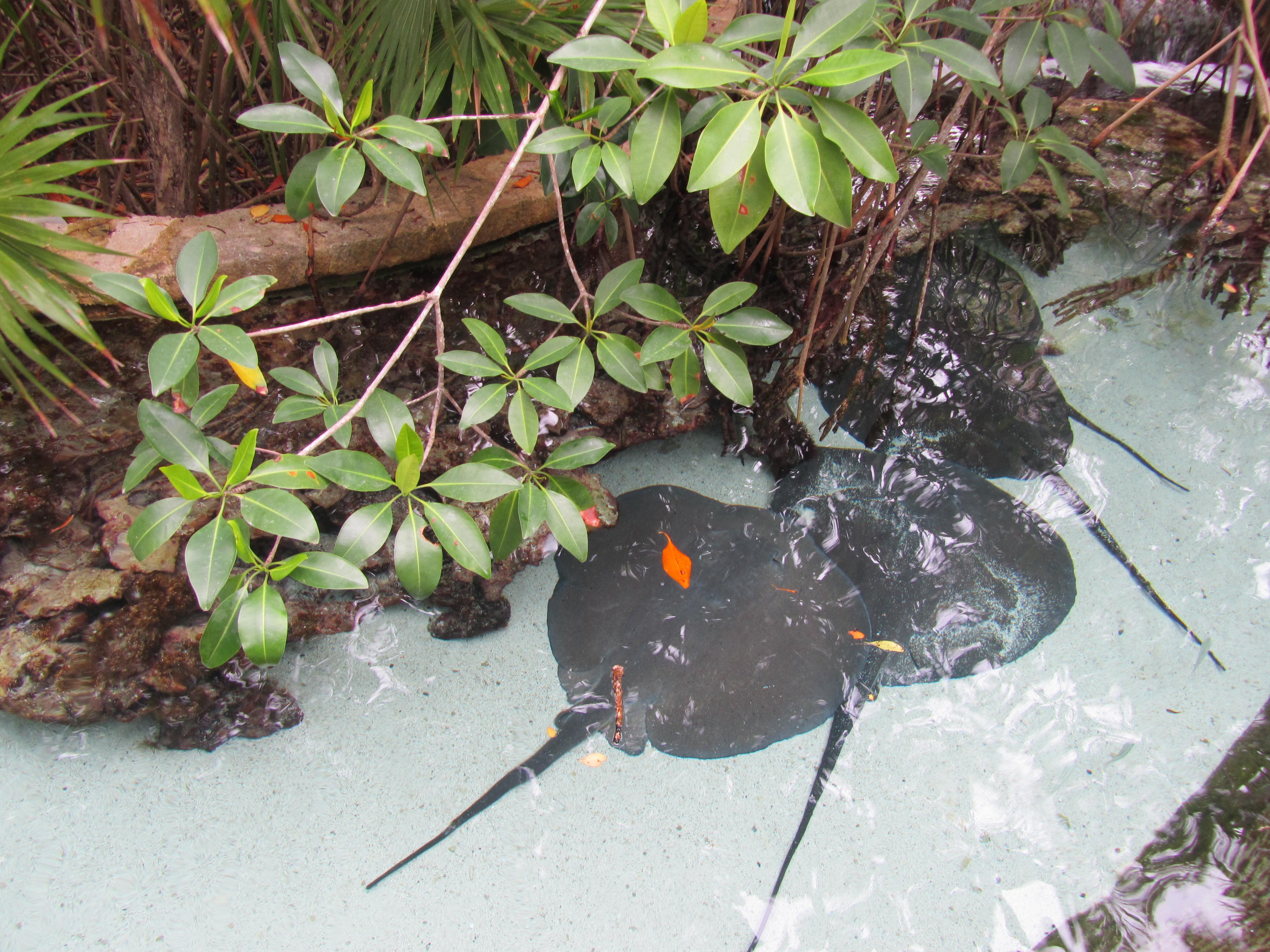 Riviera Maya Mexico Flora And Fauna Samantha Cleminson